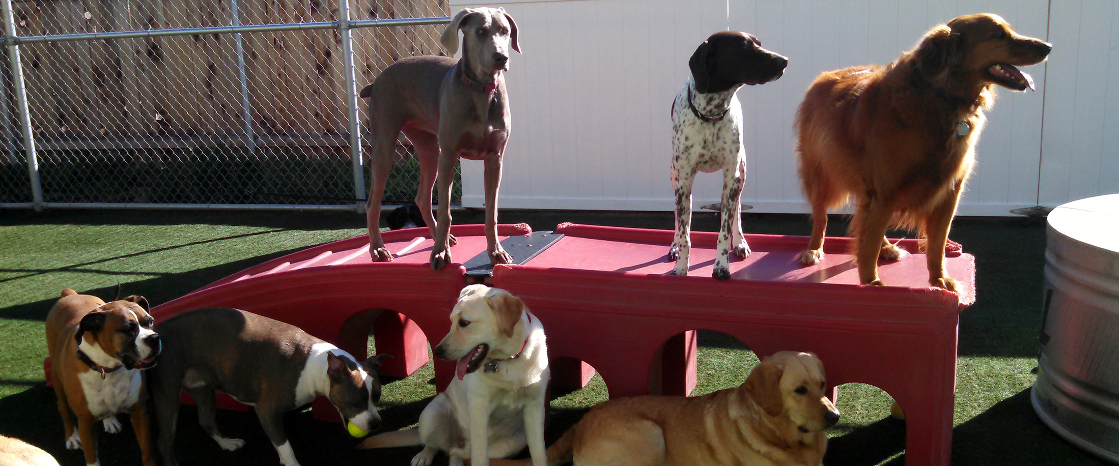 Kennels for Cats & Dogs, Pet Boarding, Daycare: Boise, ID