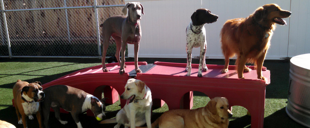 doggie day care boise id